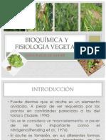 Seminario Vegetal
