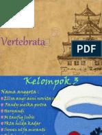 vertebrata kelompk 3