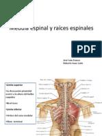Medula espinal y raíces espinales