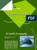 El Delfín Irrawaddy