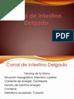Canal de Intestino Delgado