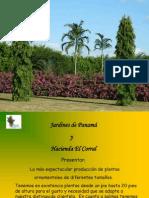 4 Jardines de Panamá - Plantas
