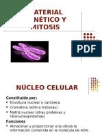 Material Genetico y Mitosis
