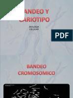 Presentación bandeo y cariotipo.pptx