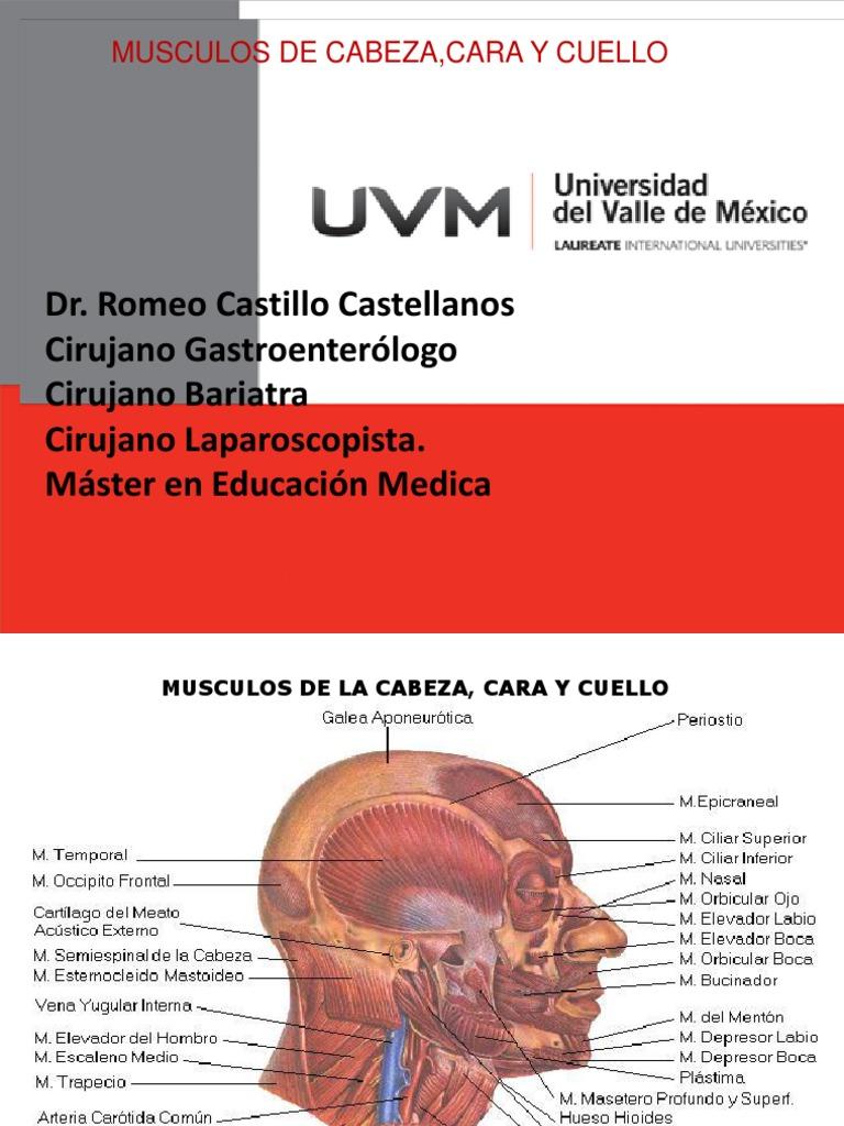 Hermosa Músculos Del Cuello Y Los Hombros Componente - Imágenes de ...