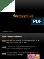 26. haemophilus