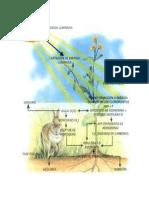 Importancia de la fotosíntesis para el ser humano y la biosfera