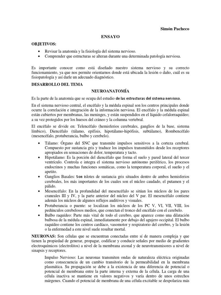 Atractivo Anatomía Y Fisiología Ensayo Ilustración - Imágenes de ...