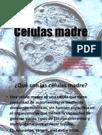 Células madre presentacion