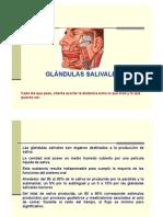 Glandulas salivales 2011