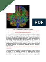 TAREA DE IMAGENOLOGIA.docx