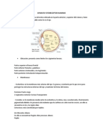 Aparato Fotoreceptor - Fonorecpetor y Mecanoreceptor Humano