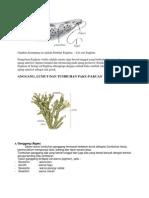 Gambar anatomi protozoa.docx