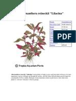 Atlas Plante de Acvariu