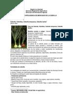inteligencia_de_mercado_de_la_cebolla_2.pdf