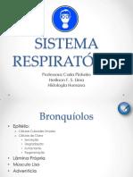 SISTEMA RESPIRATÓRIO - Bronquíolos, Pulmão e Pleura