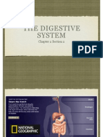 Digestive System Knp