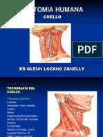 anatomiacuelloppt-110424163123-phpapp02