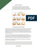 La síntesis de proteínas.docx
