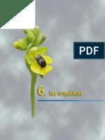 Manual de Orquideas