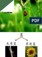 第四课     植物(2)