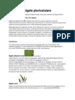 Alge Pluricelulare