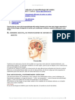 Neuro Adiccion Neurofisiologia Cerebro