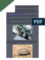 México es uno de los pocos países que cuenta con una diversidad biológica abundante.docx