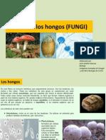 Reino de Los Hongos (FUNGI)