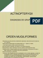 Sisan 2011 Peces 5 O.pdf