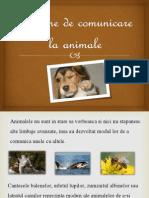 Sisteme de comunicare la animale