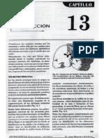 capitulo 13 de neuro By Jau.pdf