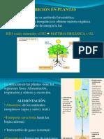 fisiología de la nutrición vegetal