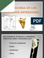 Osteologia Miembros Anteriores