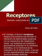 Receptor Es