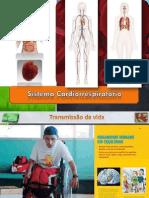Sistema Cardiovascular 2012 2013
