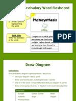 photosynthesis do activities  jm766portfolio april2013