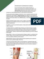 Lesiones Traumaticas de Los Meniscos de La Rodilla