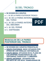 musculosdeltronco-110318223130-phpapp02