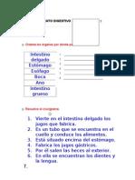 ficha2(aparato digestivo)