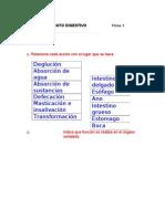 ficha5(aparato digestivo)