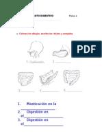 Ficha+4(Aparato Digestivo