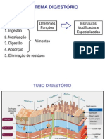 Aula Sistema Digestorio2-09