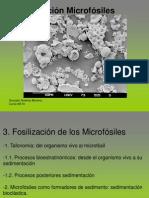 3. Fosilizacion microfosiles