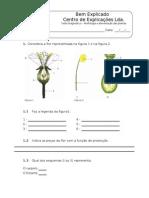 2. Teste Diagnóstico -  Diversidade das Plantas (2)