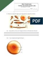 3. Teste Diagnóstico - A celula (1)