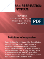 The Human Respiration System