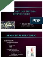 anatomiarespiratoria-100228192748-phpapp01