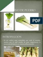 Cultivo de Puerro.