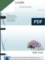 vegetacion climas templados